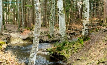 DSC00469-1schlingelnder Flussimwald maisinger copy960