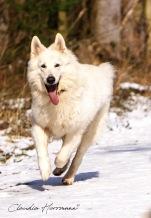 DSC03225-1riesenhundcop1900